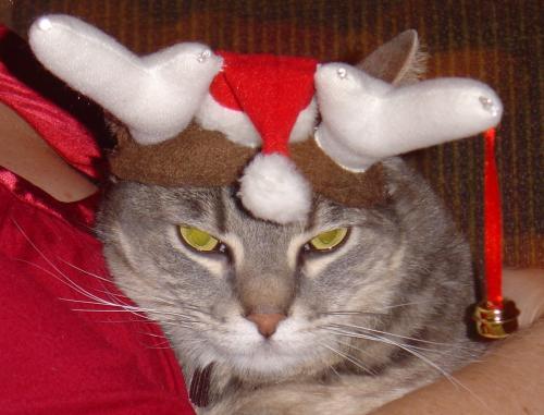 ChristmasAllie.JPG