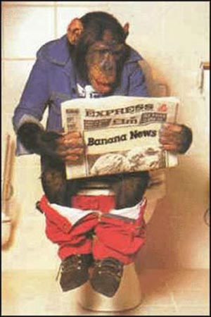 1995/1237409016-scaled.monkey_reading-1.jpg